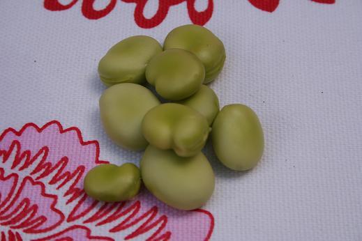 broad_beans.JPG