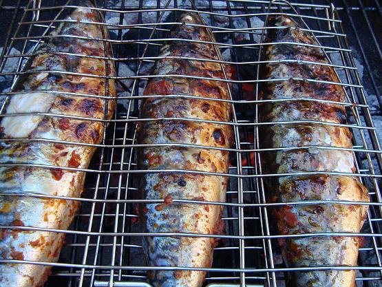 darren-mackerel