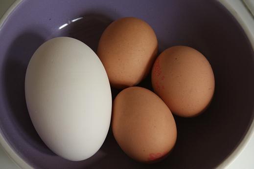 goose_egg.JPG